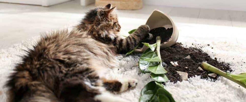 Kediler nasıl terbiye edilir? Başına buyruk kedilere karşı çözüm önerileri