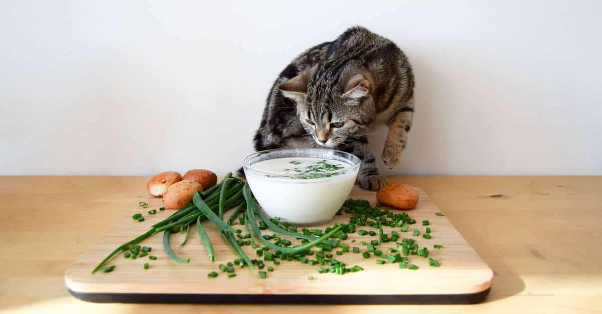 soğan ve sarımsak
