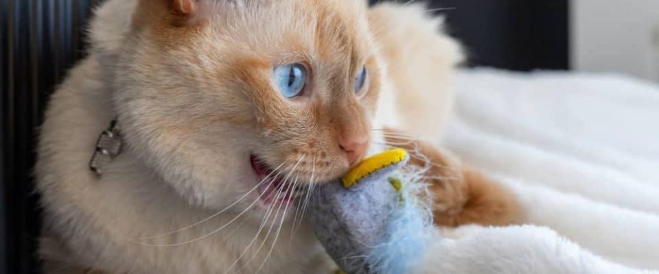 Kedilerde aşırı çiğneme sorunu ve çözüm önerileri