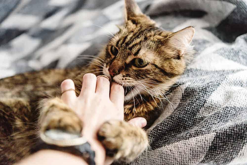 Kedilerde Davranış Problemleri