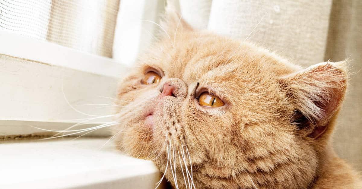 kedilerde hareketsizlik