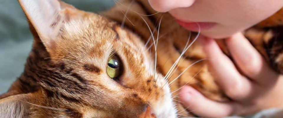 Kedilerde hiperestezi sendromu ve tedavi yöntemleri