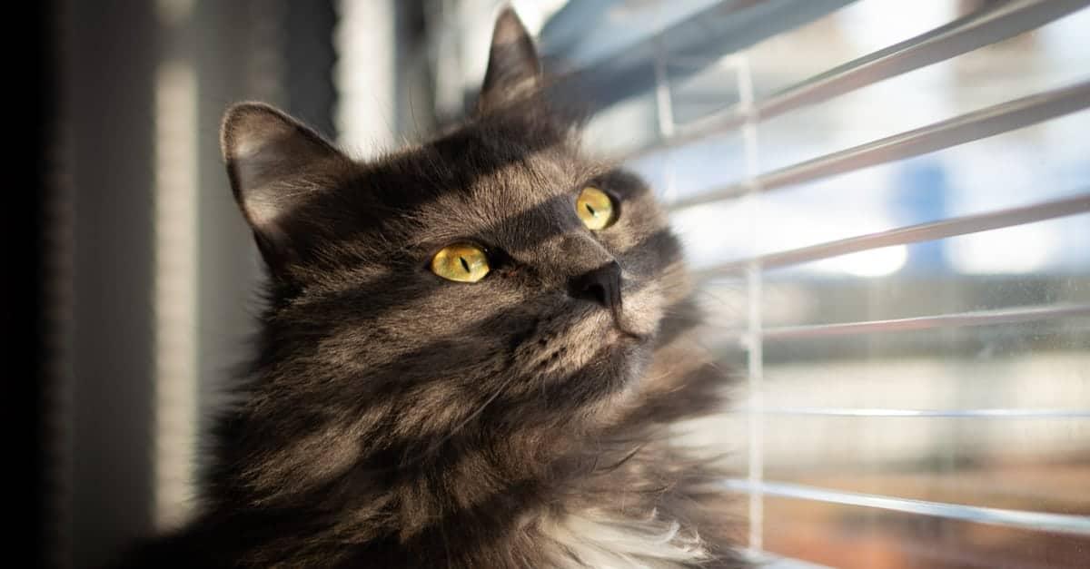 Kedilerde renk körlüğü