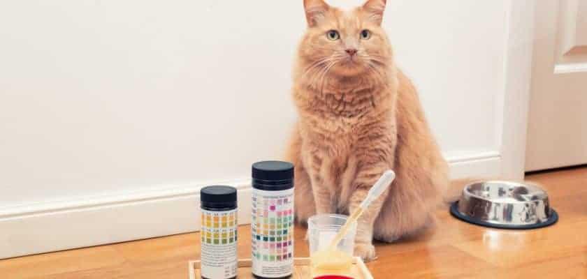 Kedilerde üreme hastalıkları
