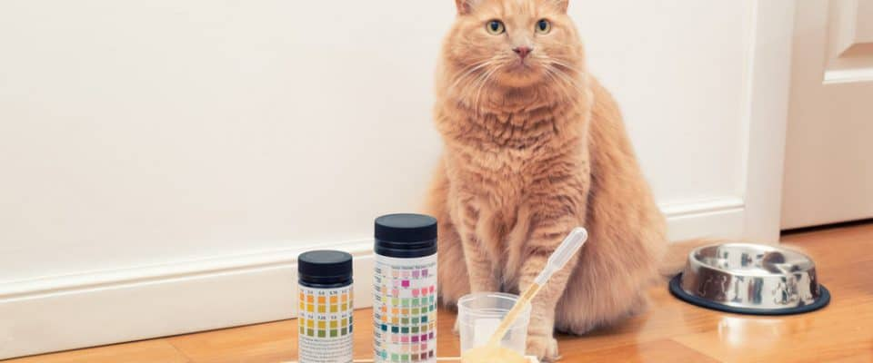 Kedilerde en sık görülen üriner hastalıklar hangileridir?