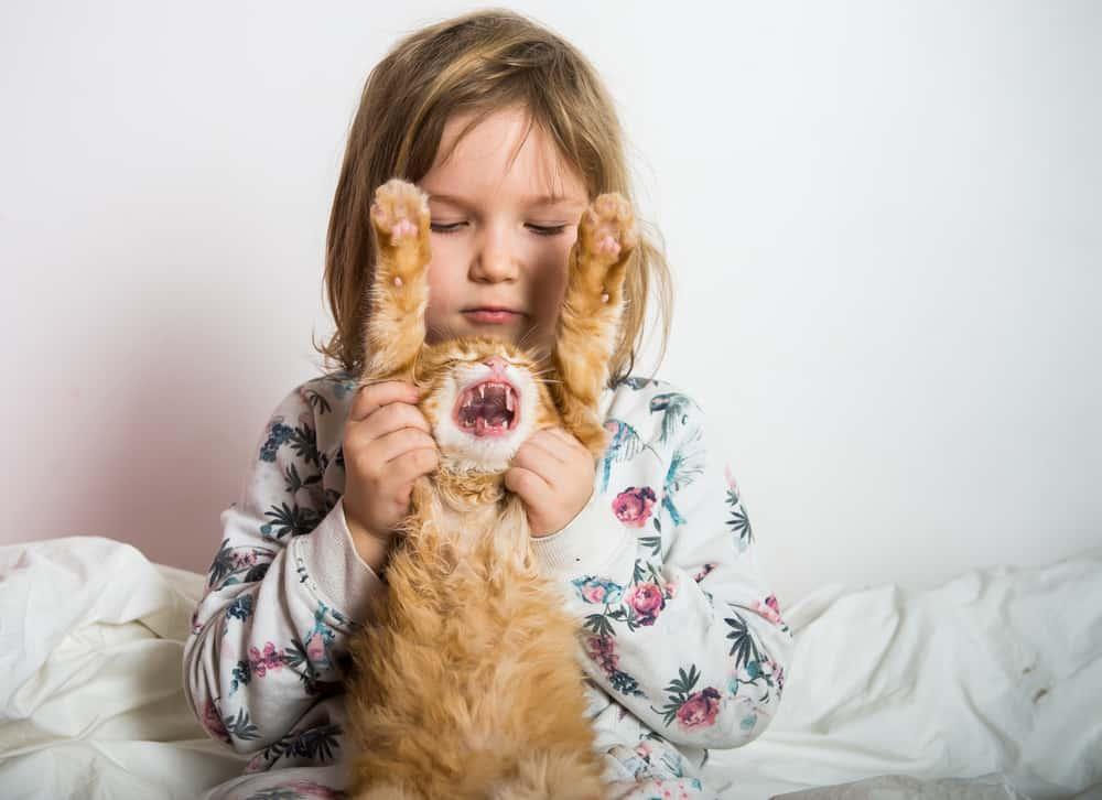 Kedilerde Veteriner Dönüşü Yaşanan Saldırganlık