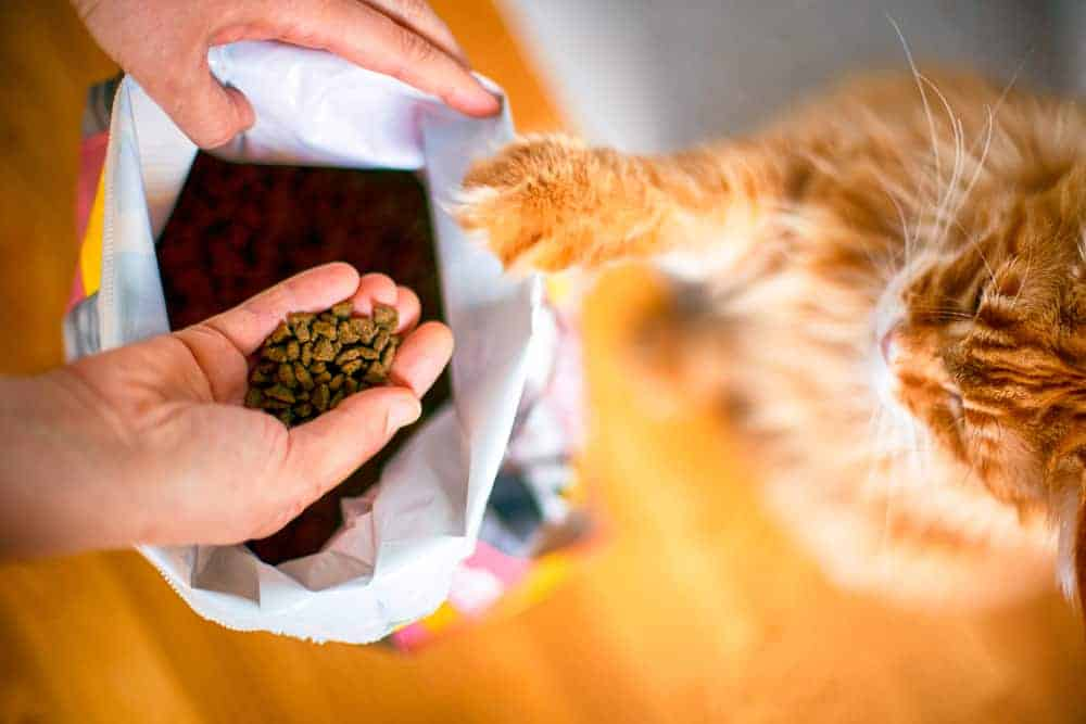 Kedileri Düzenli Beslemenin Önemi