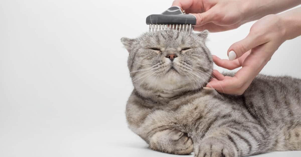 Kedileri fırçalamak