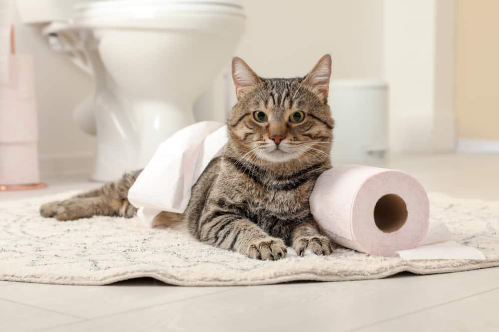 Kedileri terbiye etmek