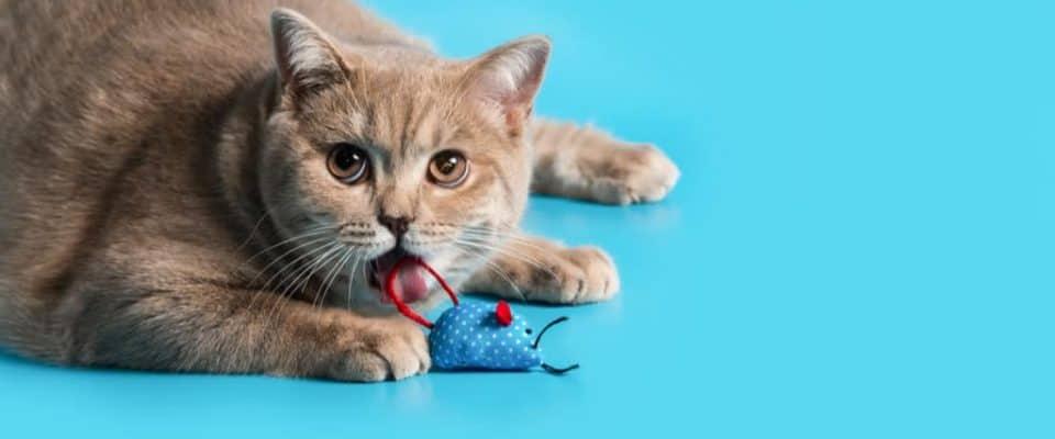 Kedilerin en sevdiği şeyler   Kedinizin bayıldığı 8 şey!