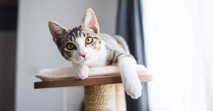 kedilerin erken kısırlaştırılmasının avantajları