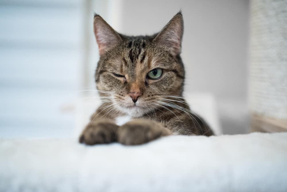 Kedilerin Gözleri İnsanlara Neler Anlatır?