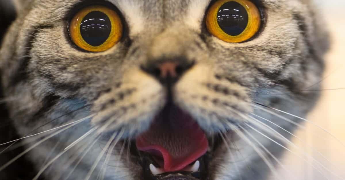 Kedilerin gözleri