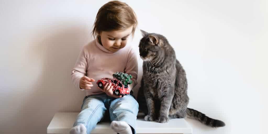 Kedilerin insan yılına göre yaşı
