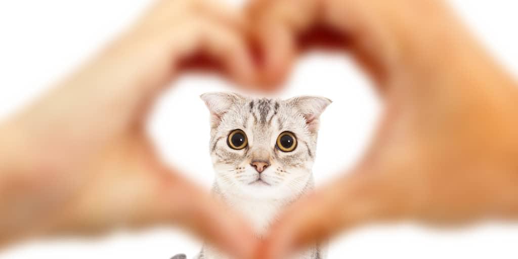 kedilerin insanlara faydaları