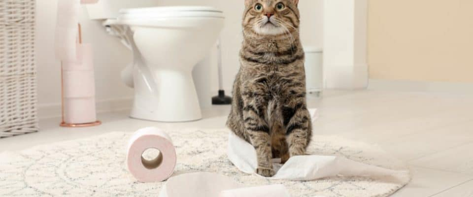 Yalnızca kedi sahiplerinin anlayacağı şeyler!