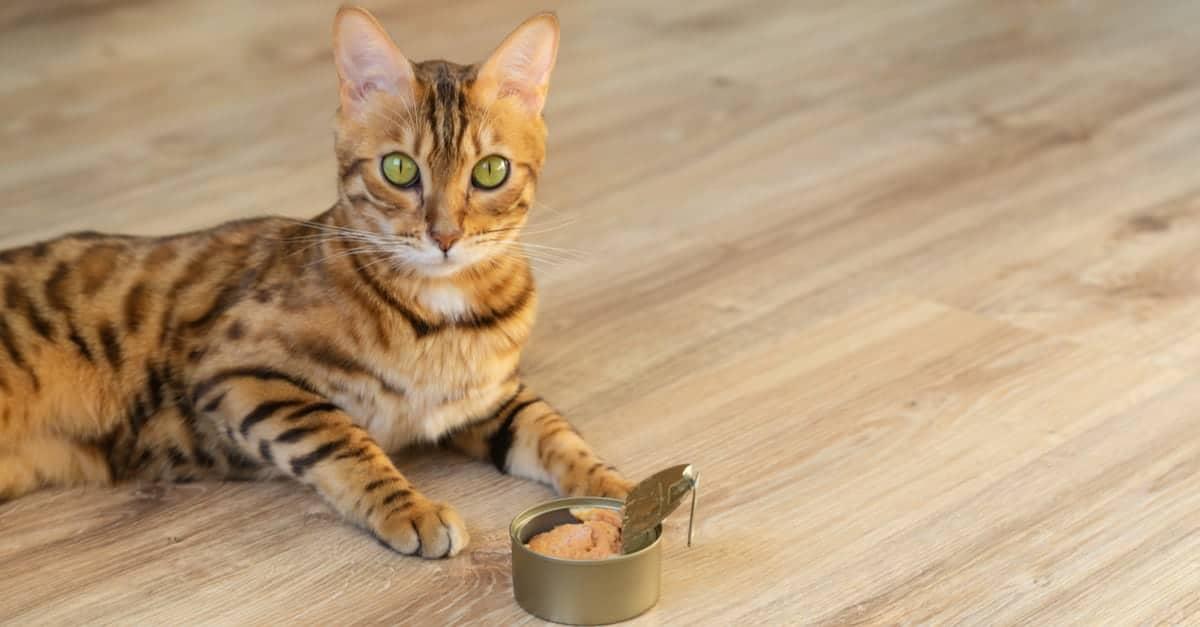 konserve ton balığı ve kedi