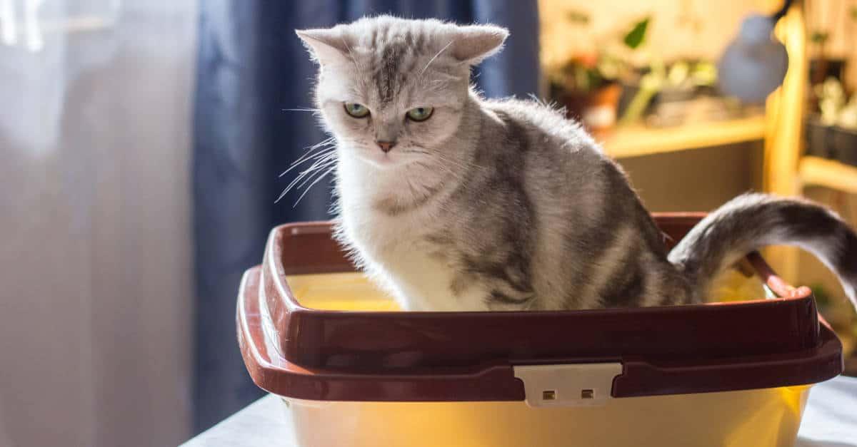 Kum kabındaki kedi