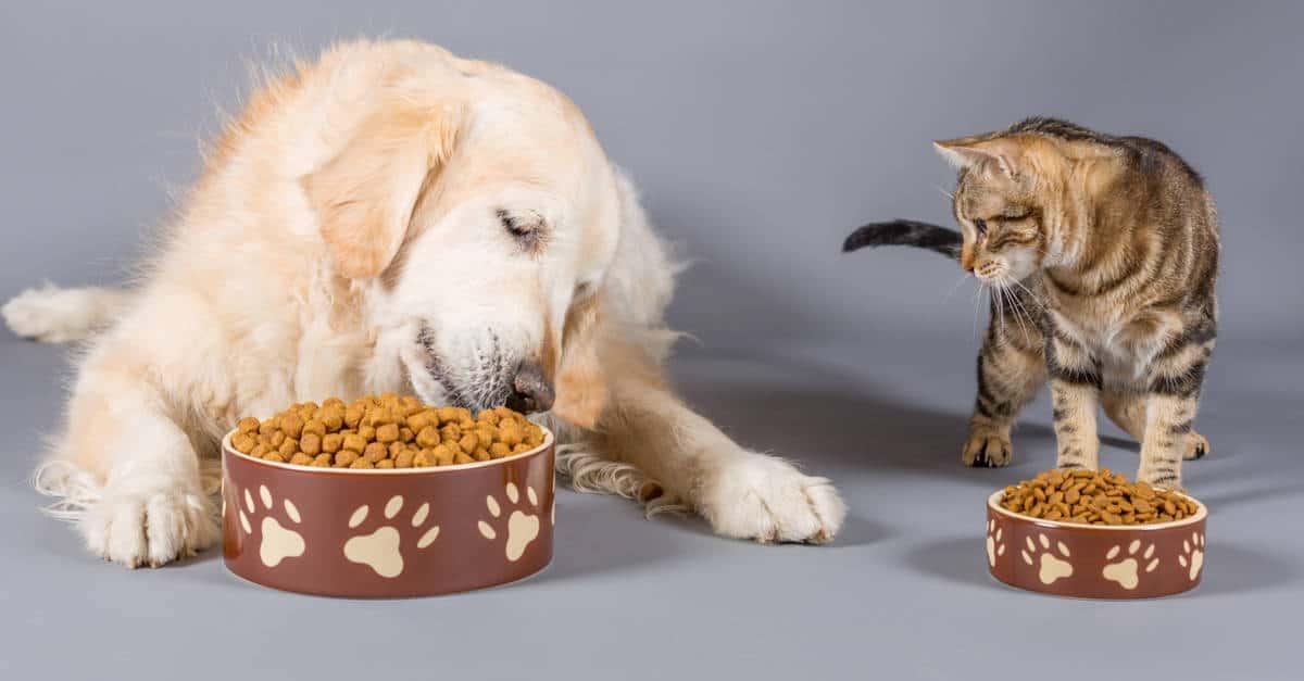 kuru mama yiyen kedi ve köpek