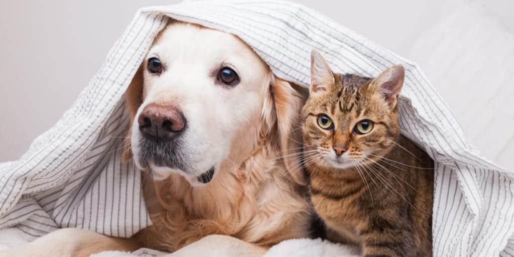 Örtünün Altında Kedi ve Köpek