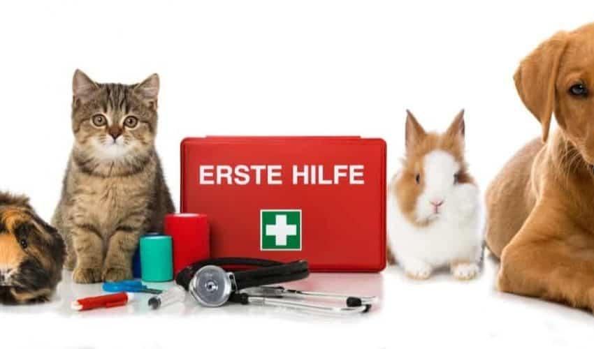 Evcil hayvanlarla acil durum hazırlığı nasıl yapılır?