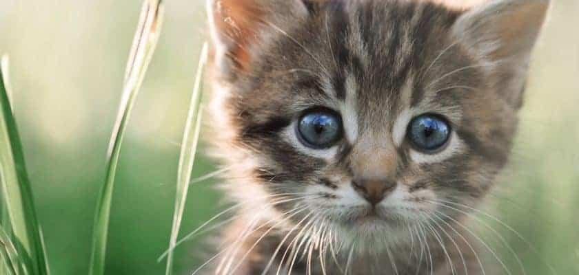 poz veren yavru kedi