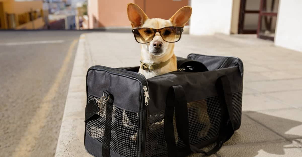 Seyahat çantası içinde köpek