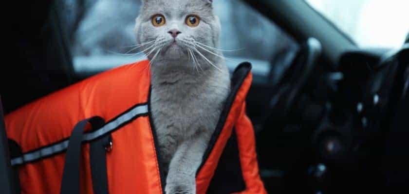Taşıma Çantasında Veterinere Giden Kedi