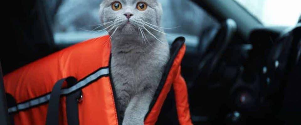 Kedilerde veteriner ziyareti öncesi yaşanan stres ve önleyici çözümler