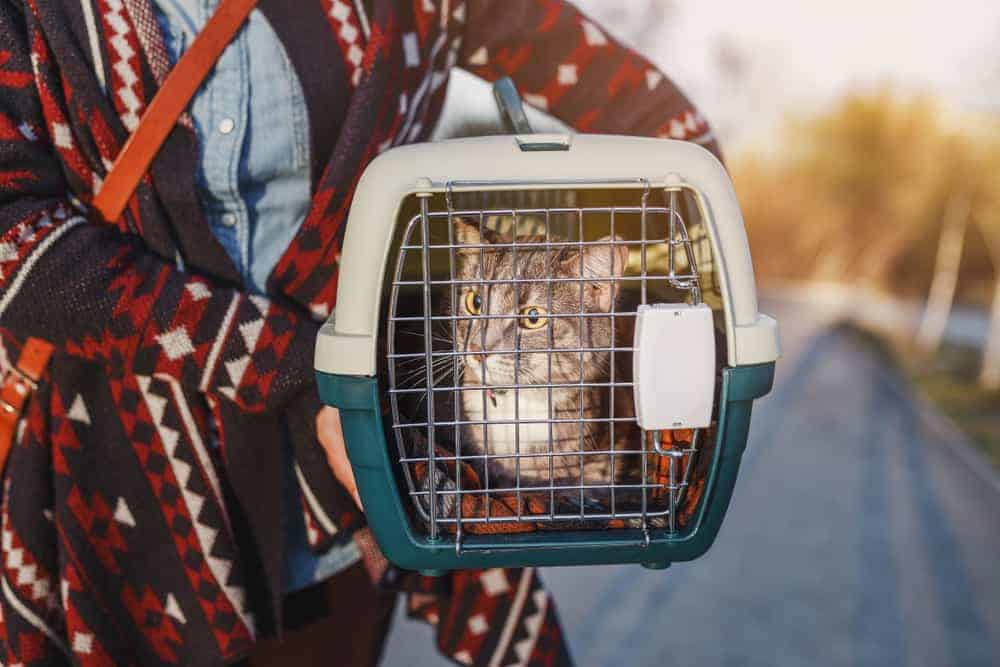 Taşıma Çantasıyla Veterinere Giden Kedi