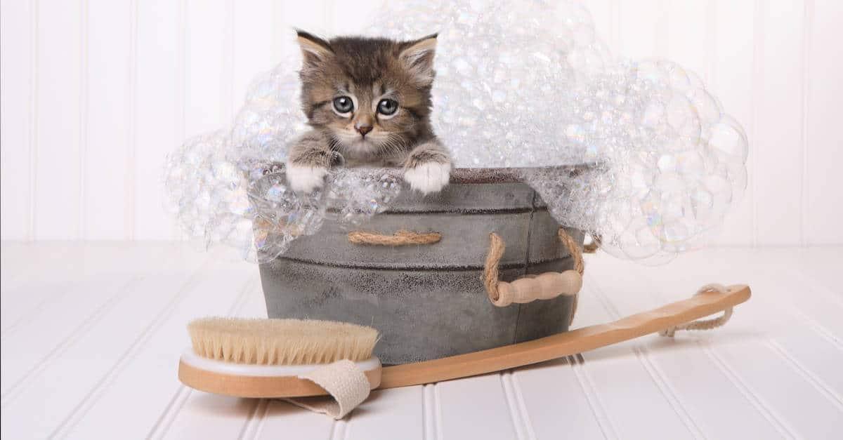 Temizlenen Yavru Kedi