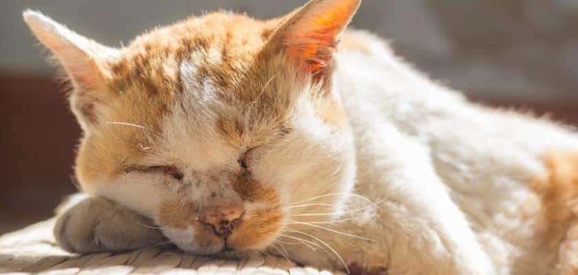 uyuyan yaşlı kedi