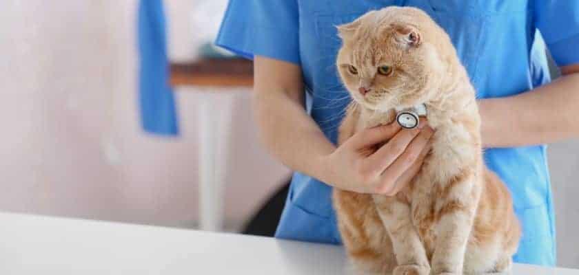 Veteriner Kliniğindeki Kedi
