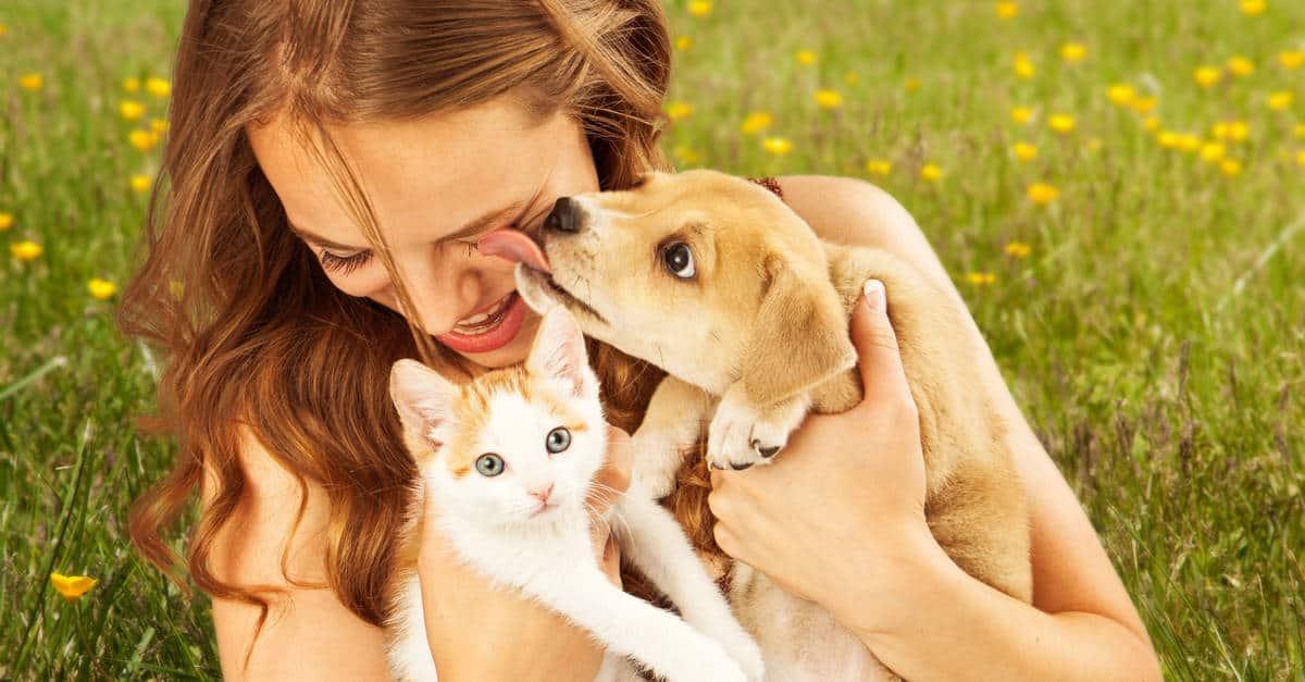yavru kediler ve köpek
