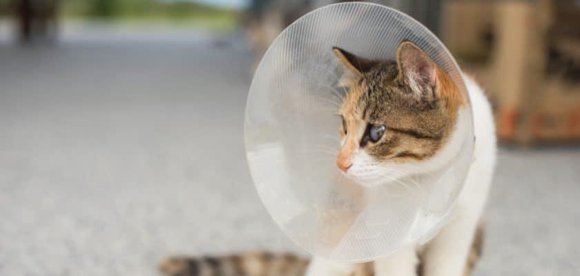 yavru kediler kaçıncı ayda kısırlaştırılır