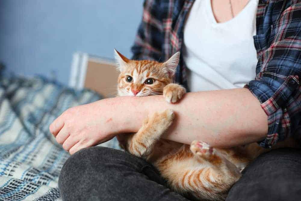 Yavru Kedilerde Saldırganlık Çeşitleri