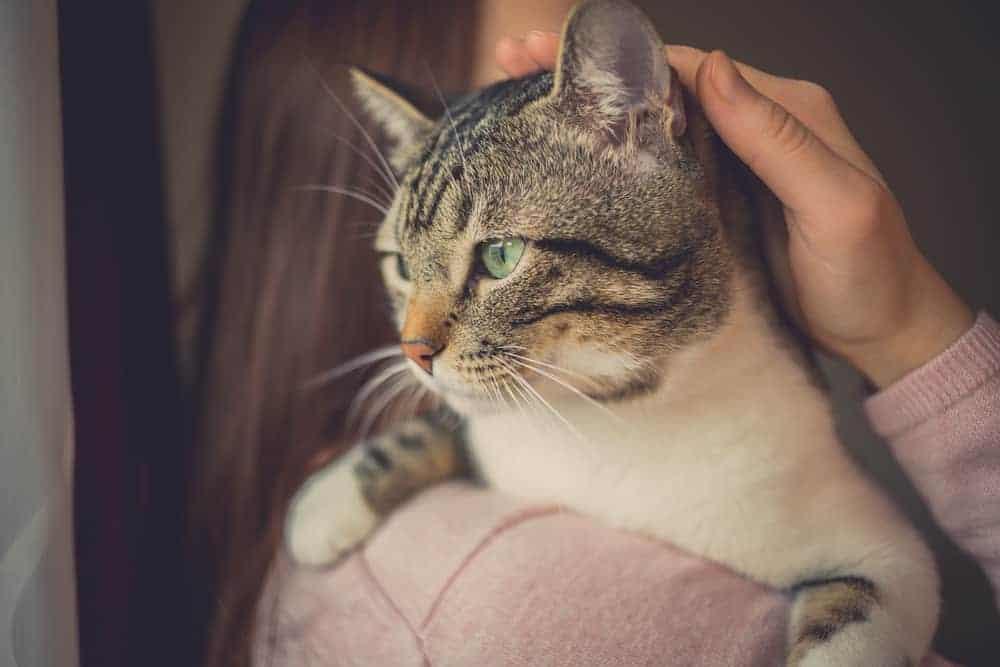 Yetişkin Kedilerin Sosyalleşmelerine Yönelik Öneriler