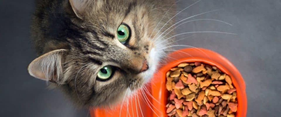 Seçtiğiniz kedi mamasının içinde neler olmalı? – Dikkat edilmesi gerekenler