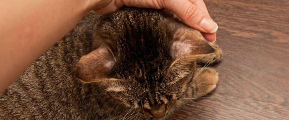 Kedilerdealopesi: Nedenleri ve tedavi yöntemleri nelerdir?