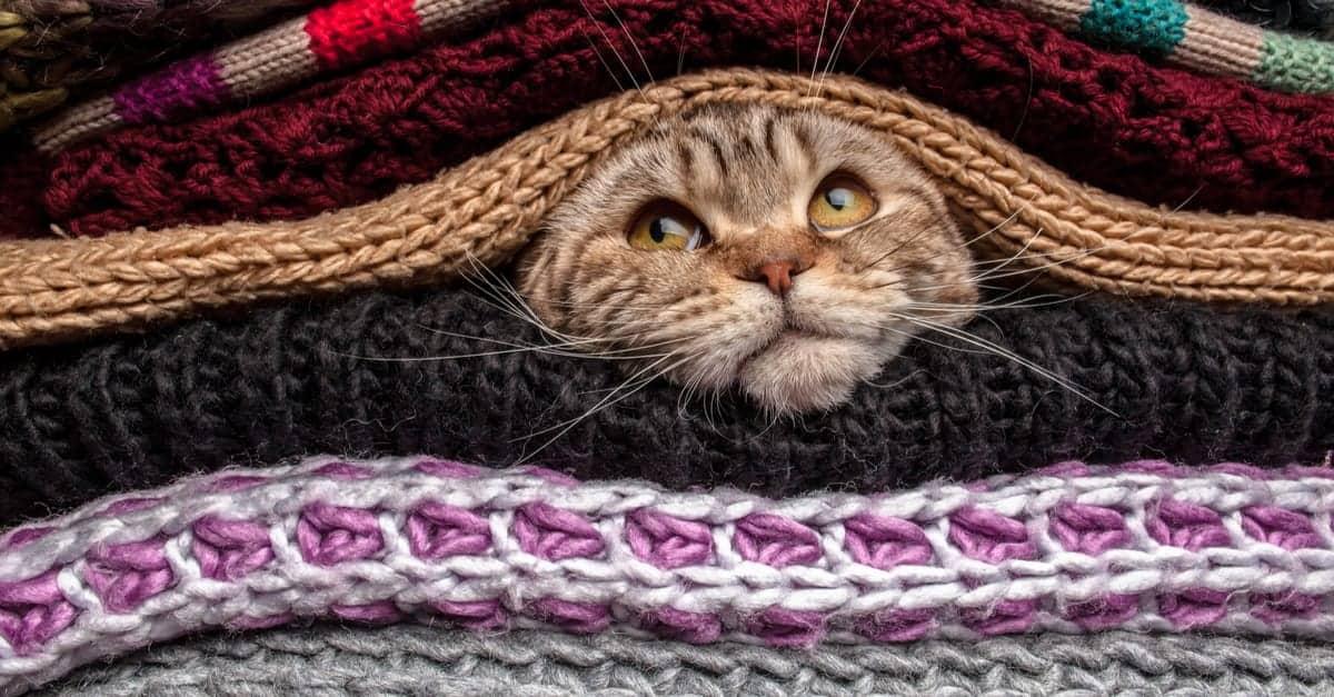 Battaniyelerin altındaki kedi