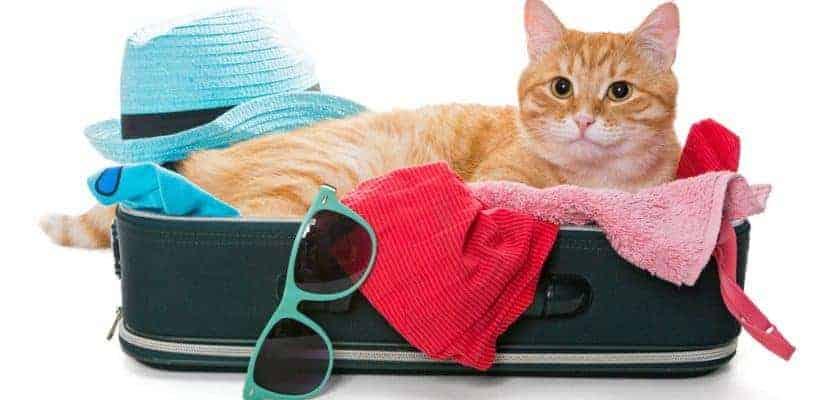 Bavulun içindeki kedi