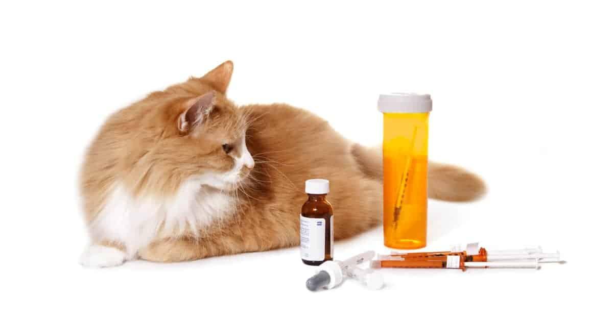 ilaçlara bakan kedi