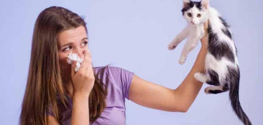 Kedi alerjisi belirtileri