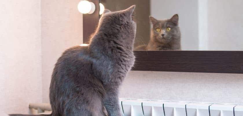 Kedi ve Ayna İlişkisi