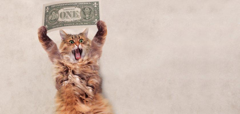 Kedi bakım masrafları
