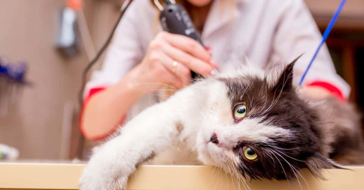 Kedi tıraşı