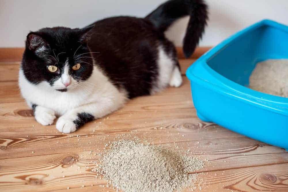 Kedi Tuvalet Kabı Yer Değişikliği