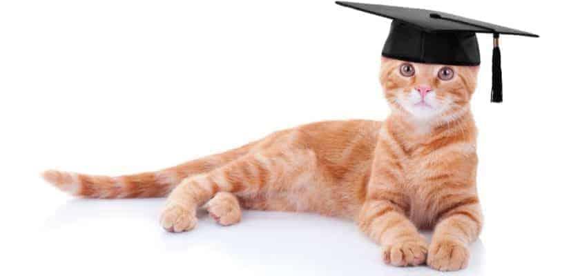 Kediler eğitilebilir mi