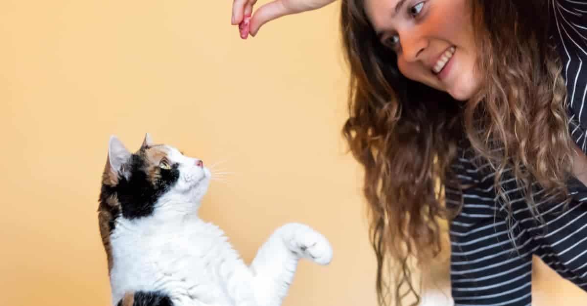 Kediler için eğitim