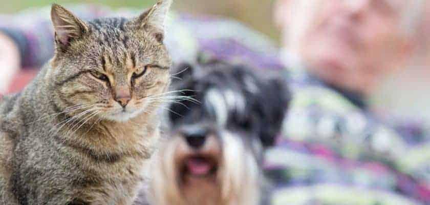 Kediler kıskanç mıdır